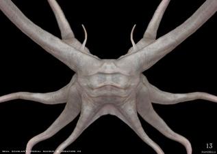Trilobite adult concept art by Ivan Manzella.