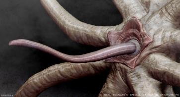 Trilobitemanzellamouth