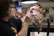 Russ Lukich paints a Parasite.