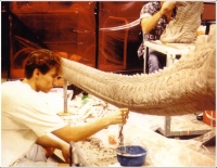The Kothoga's tail being sculpted.