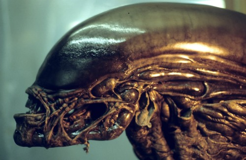 Alien3headclose