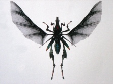 The Hopper Bug digital model in dorsal view.