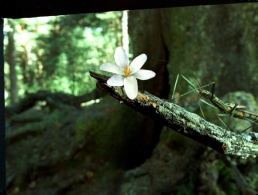 The fairy in its stick insect form at the end of the film.