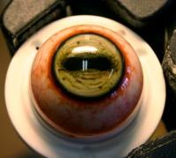 The Faun's eye.