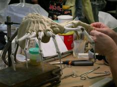 Building the practical Facehugger.