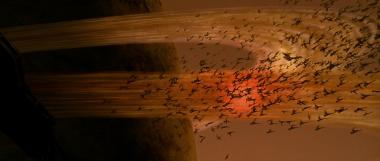 The Hatchling swarm.