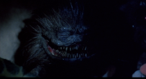 critters-critters