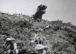 Godzilla1954kingofthehill
