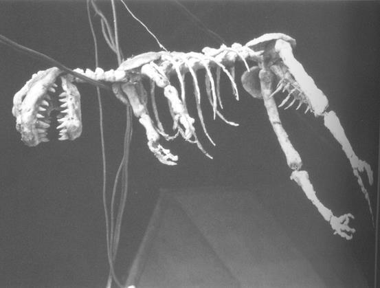 Godzilla1954skeleton