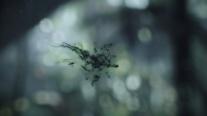 Aliencovneospores